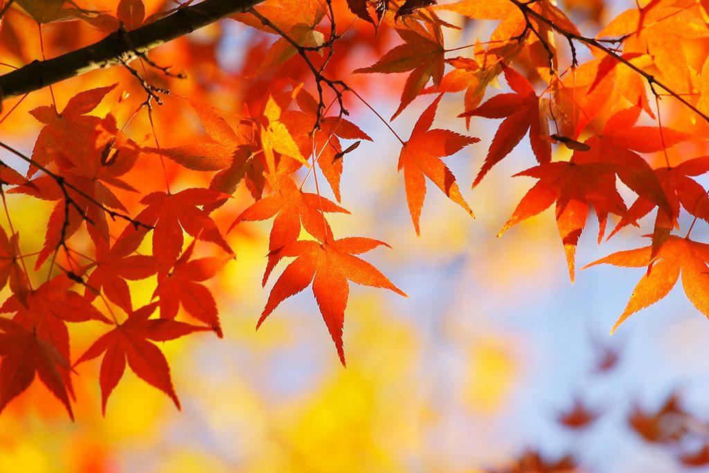秋カラーでおしゃれに♪キーケースやパスケースにも秋らしさをプラスしませんか?